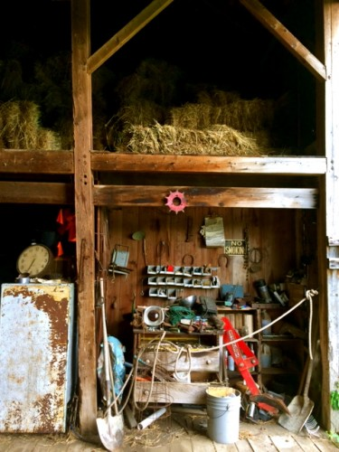 Me and the barn swallows, hangin in the barn...